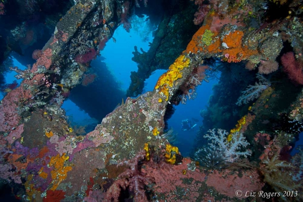 December: soft corals on the wreck of the Liberty, Bali