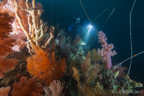 Deep reef at Wilson's Prom